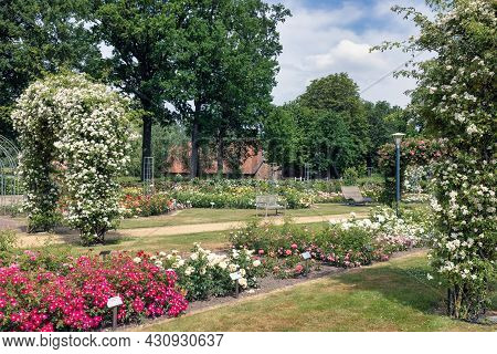 Dutch Rose Garden With Pathway, Wooden Bench And Pergola