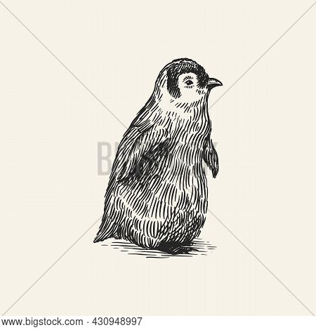 King Or Emperor Penguin Chick. Cute Baby Small Animal. Vector Graphics Black And White Drawing. Hand