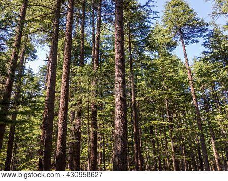 Swat Valley Kalam Deodar Trees Natrual Forest
