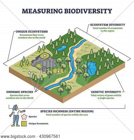 Measuring Biodiversity In Ecosystem Or Species At One Region Outline Diagram. Labeled Educational Bi