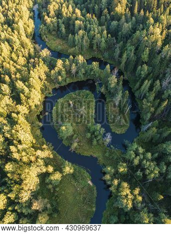 The River In The Forest In The Form Of Yin And Yang Loops. Lindulovskaya Grove On The Karelian Isthm