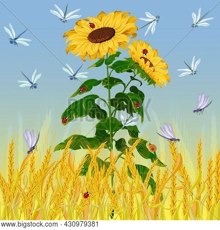 Sunflower And A Field Of Ears.sunflowers, Insects And A Field Of Ears On A Colored Background In A V
