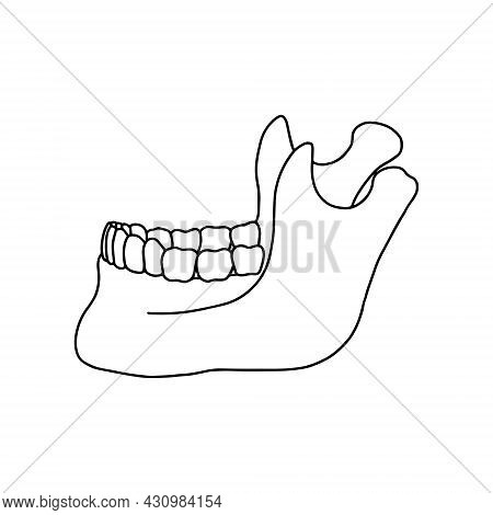 Lower Human Jaw With Teeth, Side View. Outline, Anatomical, Hand Drawn Illustration On White Backgro