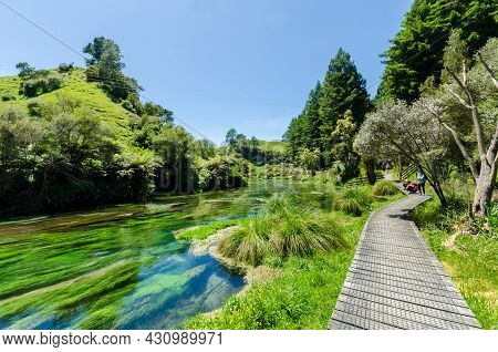 Blue Spring,new Zealand -dec 25,2015 : Blue Spring Which Is Located At Te Waihou Walkway,hamilton Ne