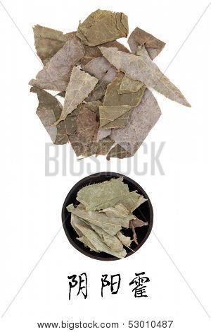 Epimedium used in traditional chinese herbal medicine with mandarin title script translation. Yin yang huo.