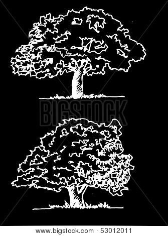Vector trees with leaves leaf branch  silhouettes