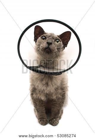 Cat wearing elizabethan collar on white background