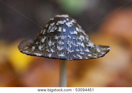 Magpie Inkcap - mushroom hat
