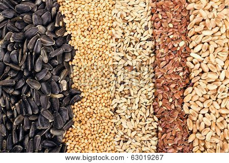Cereal Grains And Seeds : Rye, Wheat, Barley, Oat, Sunflower, Flax