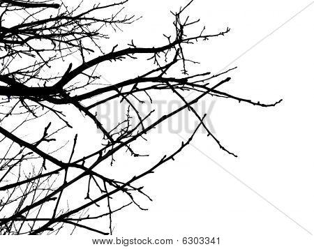 Silhouette of branches