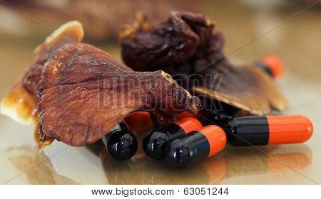 Ganoderma Mushroom With Capsule