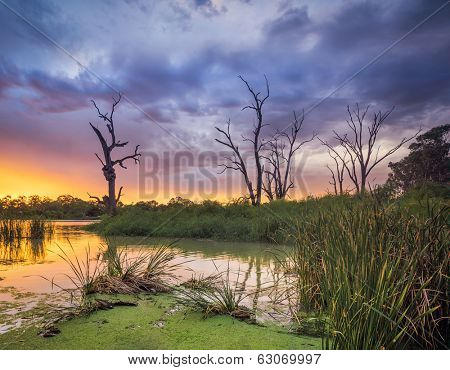The River Murray in South Australia