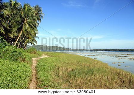 Footpath Near Palm Trees