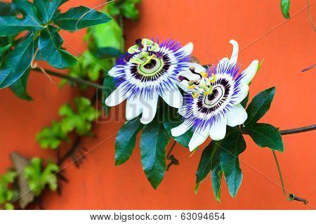 Alien Flowers
