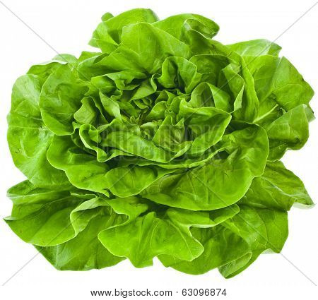 Bunch of Fresh Green Salad Isolated On White Background  poster