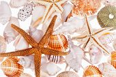 various types of sea shells isolated on white background poster