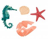 Collection marine life seahorse starfish and seashell svector illustration  without gradients poster