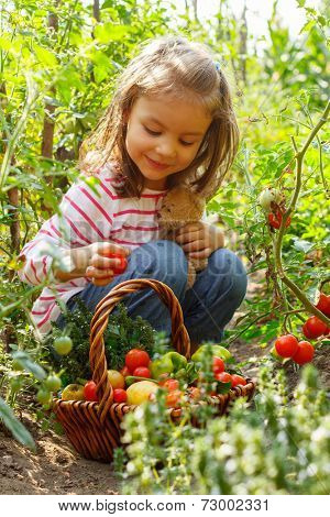 Vegetable garden, child - lovely girl with the basket of ecological harvests