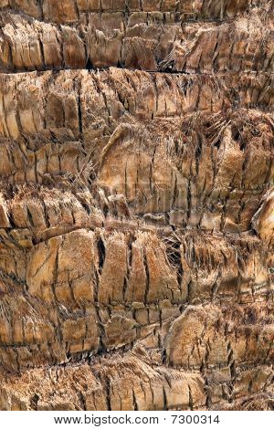 Palm Tree Texture