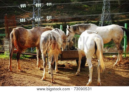 cute horse walks on the ranch poster