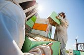 Low angle view beekeepers unloading honeycomb boxes together from truck at apiary poster