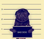 a mugshot of a bad dog toned with a retro vintage instagram filter effect poster