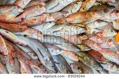 Bunch Of Fresh Fishes Displayed In Market