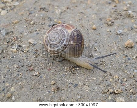 Close-up Of A Snail