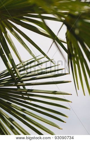Palm leafs, selective focus