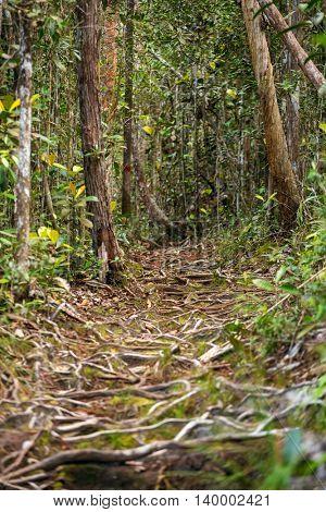 Trail in the rain forest, Bako National Park, Sarawak, Malaysia