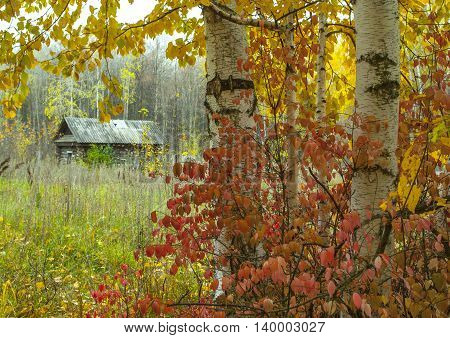 beautiful autumn yellow leaves of the trees in the vast fields and woods with the blue sky