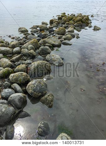 The outgoing tide has revealed a natural causeway of barnacle covered rocks.