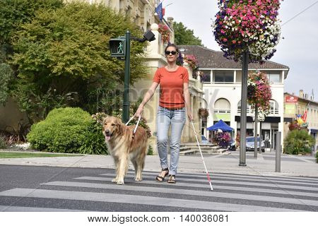 Blind woman crossing the street with help of guide dog