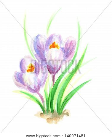 the snowdrop flowers. hand painted the snowdrop flowers. Watercolor painting.