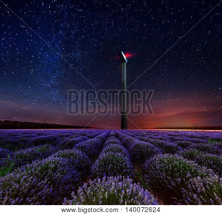 Lavender flower blooming fields in endless rows. Night shot.