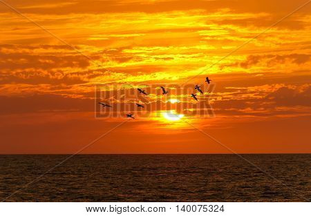 Birds silhouettes is a flock of large seabirds flying against a brilliant orange vivid sunset cloudscape sky.