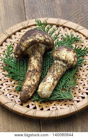 matsutake mushroom, japanese food