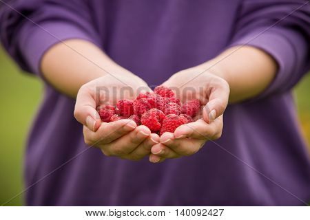 Ripe red raspberries in the woman hands. Organic raspberries in hands. Raspberries Woman showing raspberries in closeup Healthy food and raspberry concept