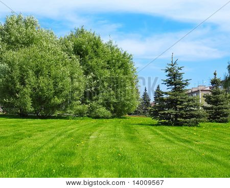 Green lawn with trees in city park