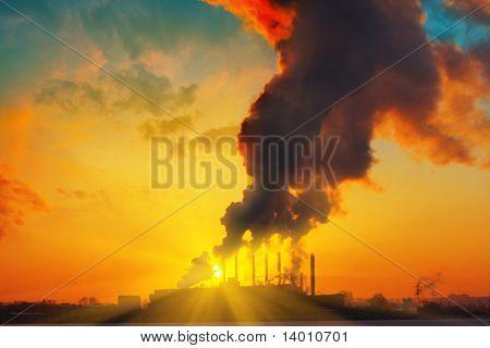 Plant with smoke under sunset light