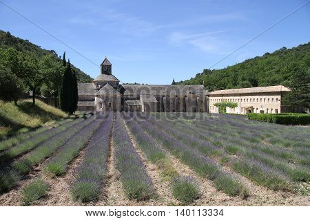 Old Sénanque Abbey with lavender field in France