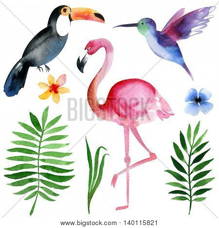 watercolor tropical birds and elements