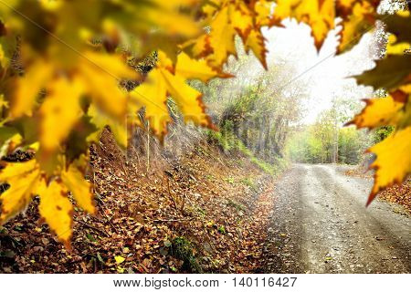 fall time in forest and colorful leaves