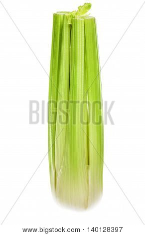 Fresh Celery highlighted on a white background.
