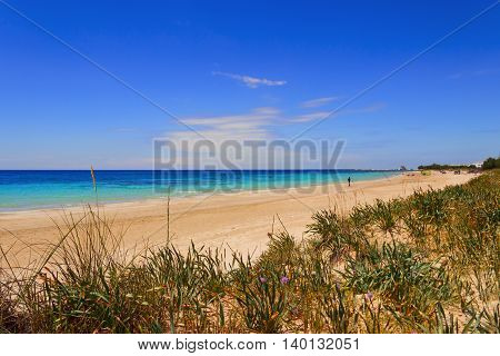 SUMMERTIME.Ionian coast of Salento:Torre Pali beach (Lecce). ITALY (Apulia)..The low sandy coastline is characterized by dunes covered with Mediterranean scrub.