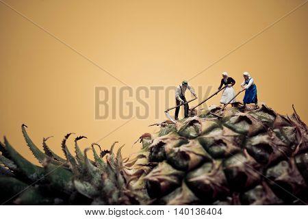 Miniature vintage farmers harvesting pineapple. Macro photo