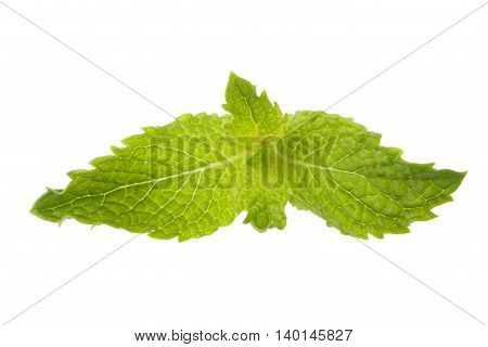 mint leaf isolated on a white background