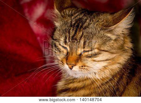 portrait of sleeping fanny cat