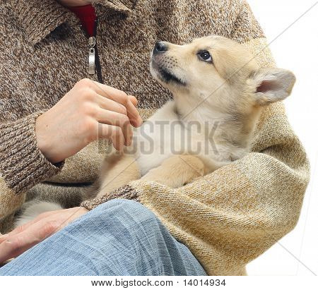 Little dog in strong men's hands