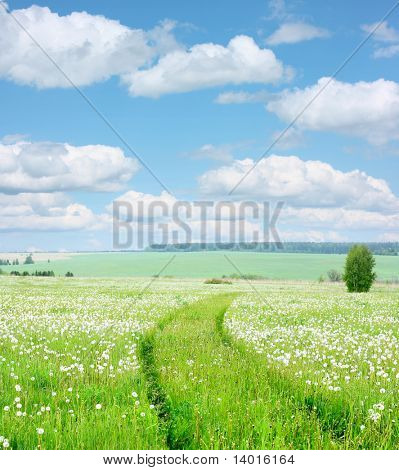 Meadow with green grass and road through dandelions under blue sky with clouds